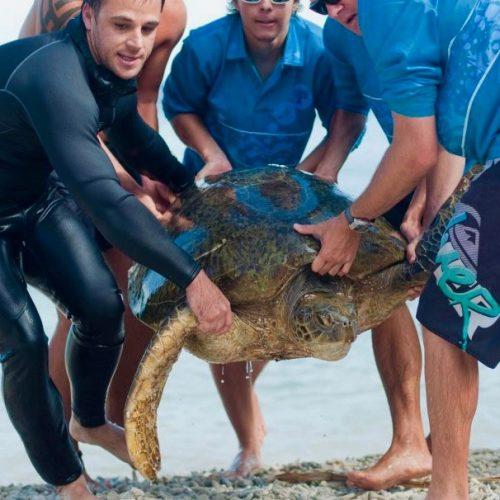 Vrijwilligerswerk in Australië - werk aan het behoud van de schildpadden