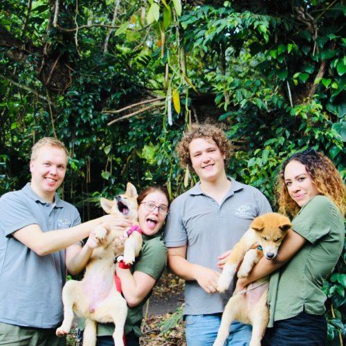 Vrijwilligerswerk in Australië - Werken met dieren in Australië