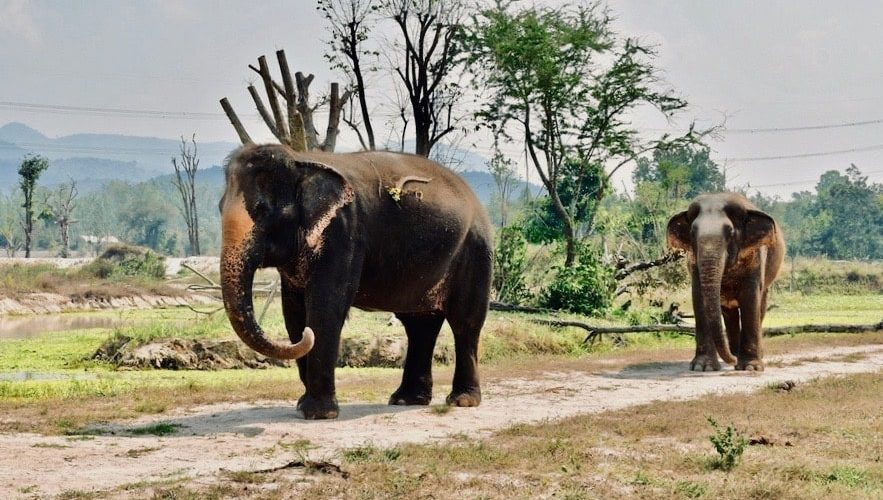 Olifanten Vrijwilligerswerk Project Thailand