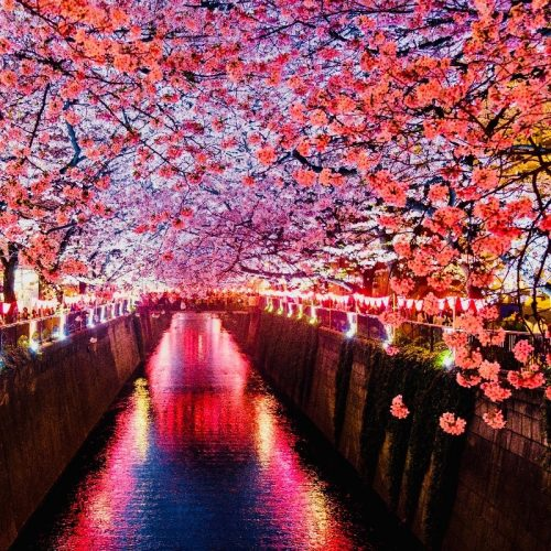 Kersenbloemen langs gracht in Japan