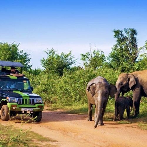 Bezoek de olifanten in het Udawalawe National Park tijdens de Sri Lanka Experience Groepsreis