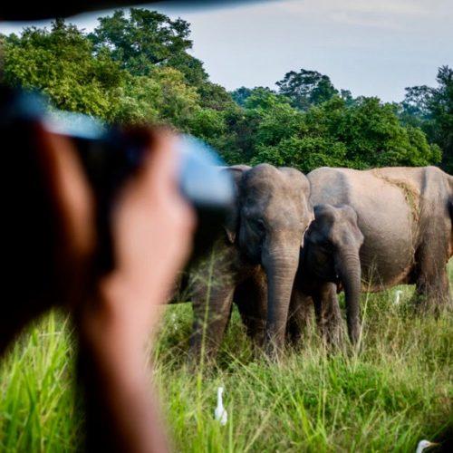 Foto's maken van wilde olifanten tijdens de Sri Lanka Adventure Groepsreis