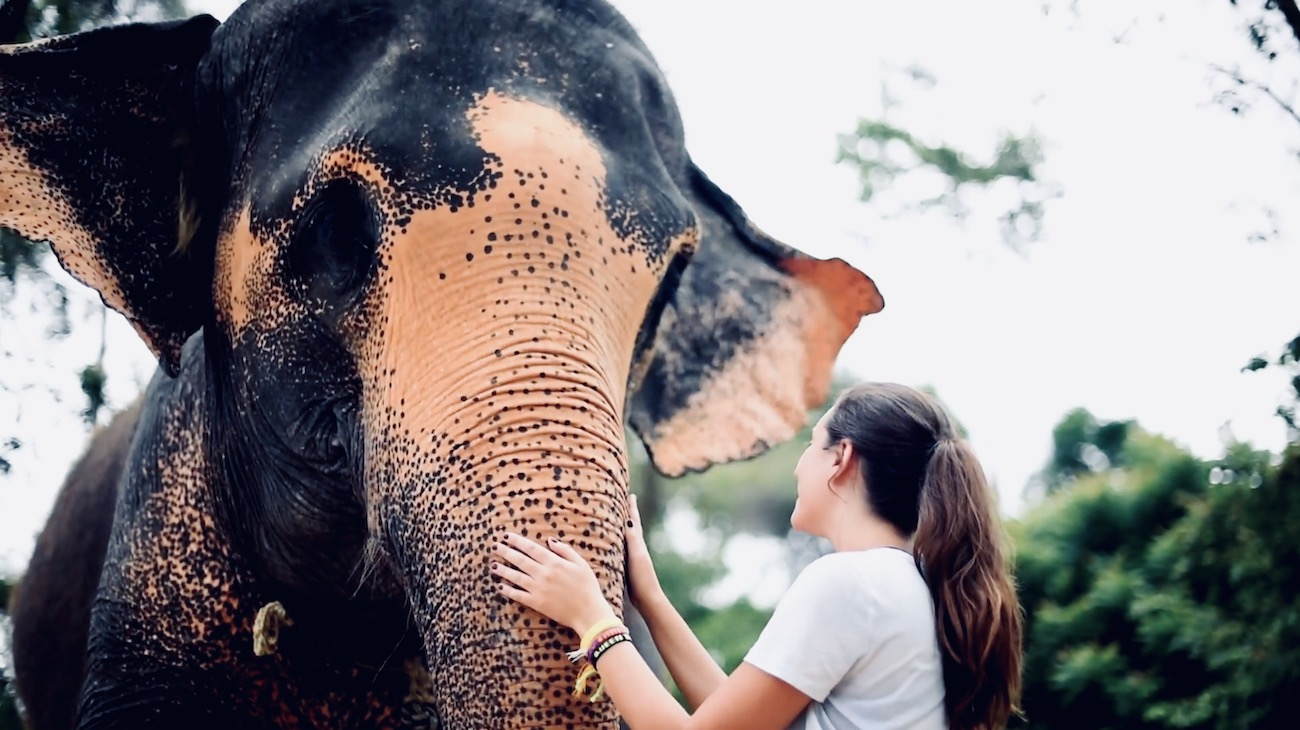 Ontmoet olifanten in Thailand tijdens de Thailand Premium Groepsreis
