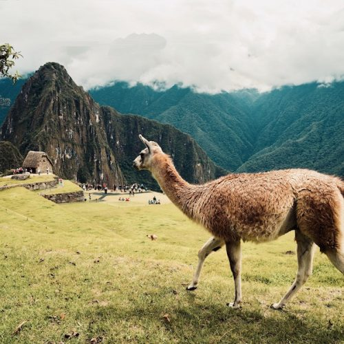 Dwaal door de ruines met de Peru Inca Groepsreis