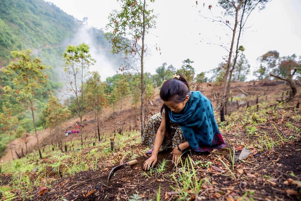 Nieuwe bomen planten voor de Eden Reforestation Projects