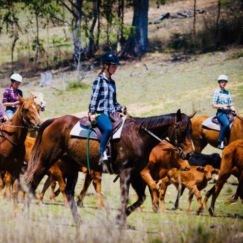 Werken met paarden op een boerderij in Australie