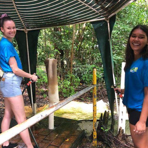 Behuizingen van de schildpadden schoonmaken