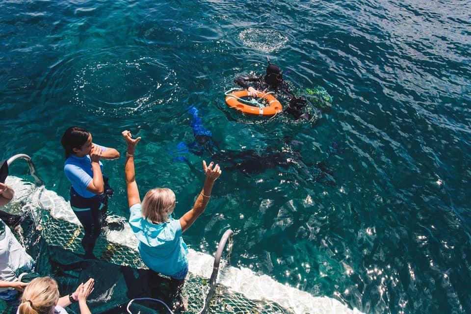 De gerevalideerde schildpadden terug naar zee