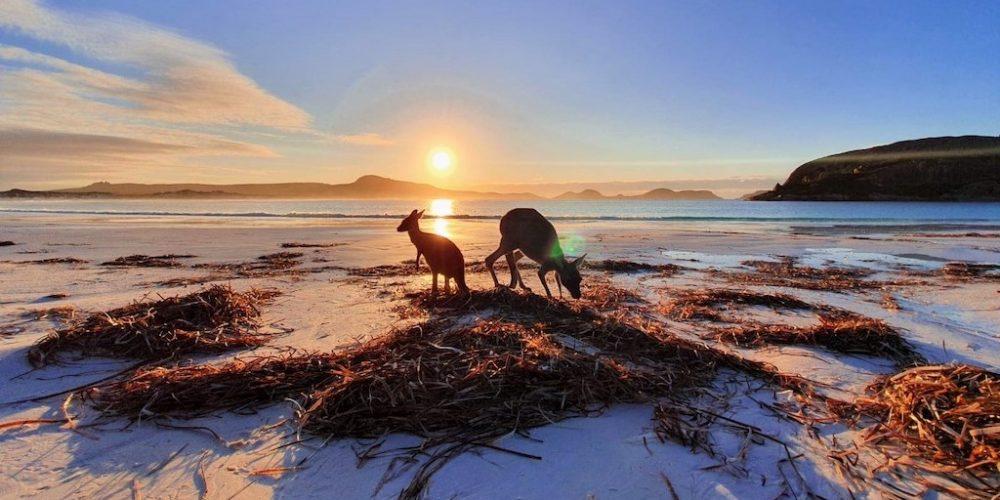 De kangoeroes willen altijd op de foto in Esperance