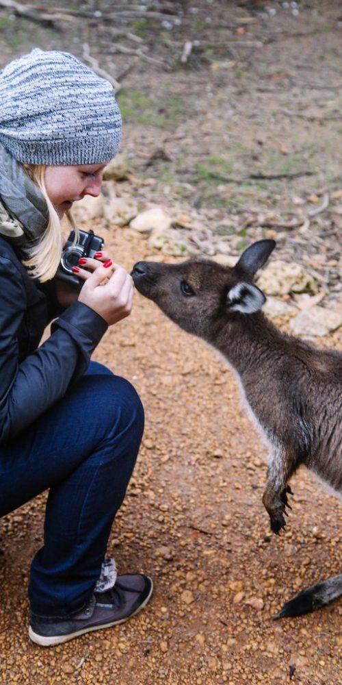 Ontmoet de nieuwsgierige kangoeroes in het wild