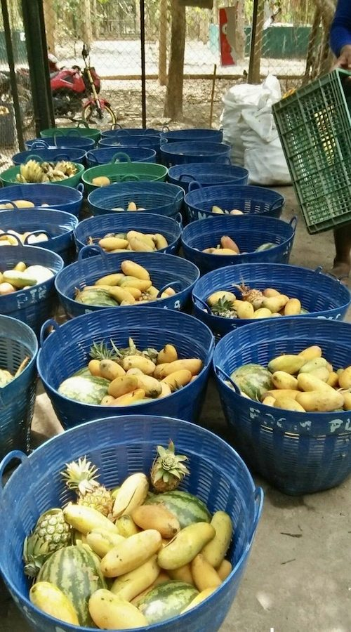 Fruit voor de olifanten en wilde dieren