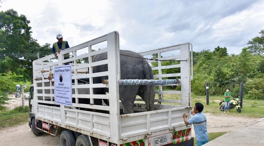 Olifanten worden gered in Thailand