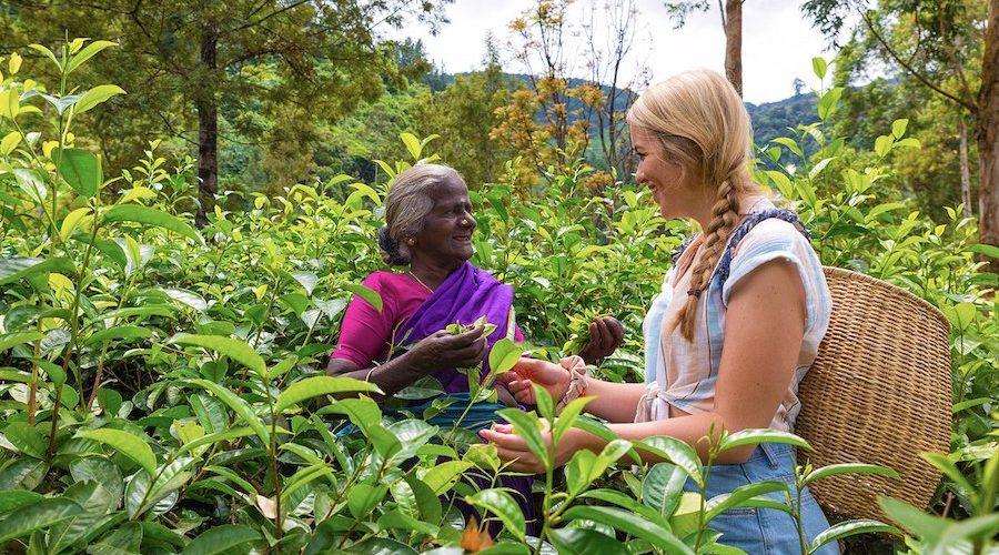 Sri Lanka theeplantages