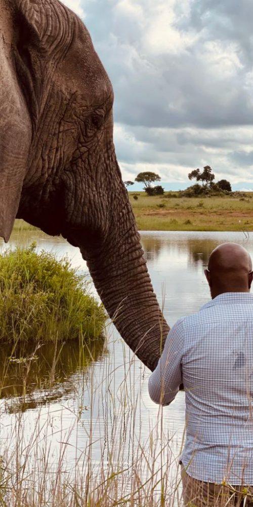 Bescherm de olifanten in Afrika