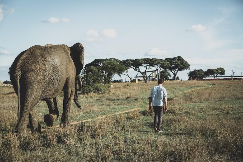Bijzondere band met de olifant