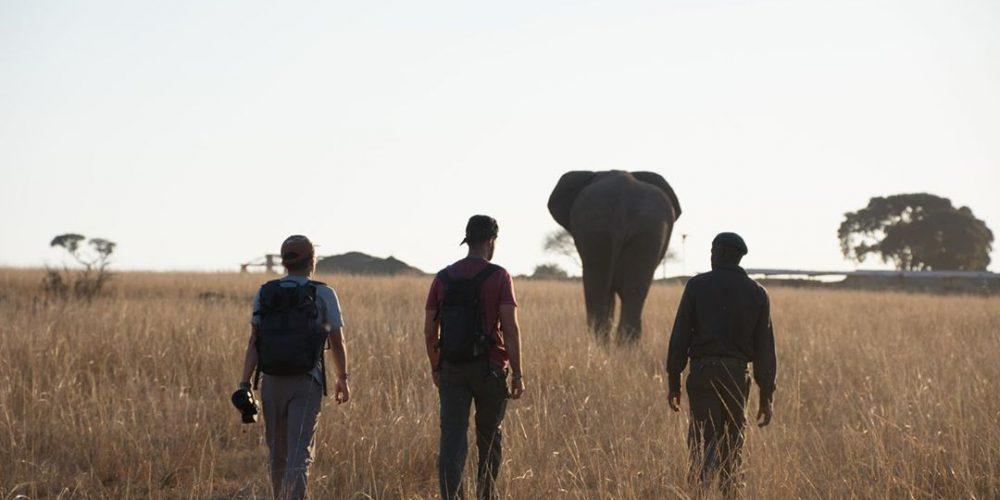 Bouw als vrijwilliger een band op met de olifanten