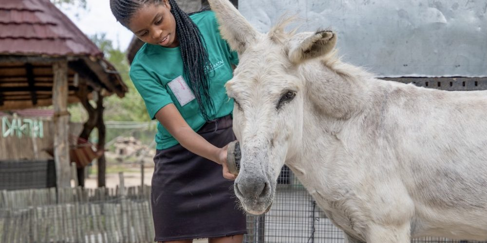 De kinderen helpen mee de wilde dieren in Zuid-Afrika verzorgen