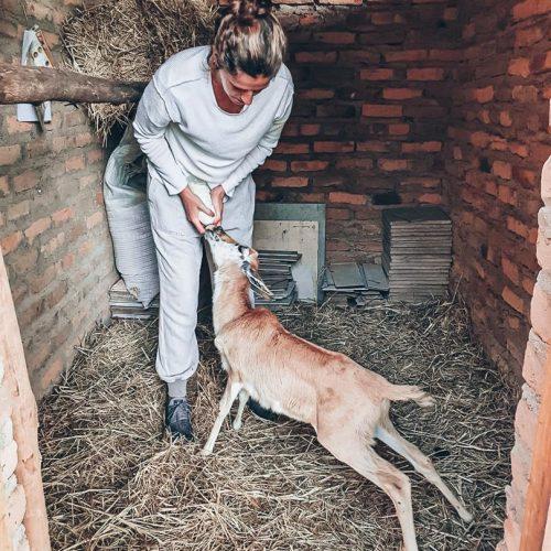 Dieren voeren in Zimbabwe