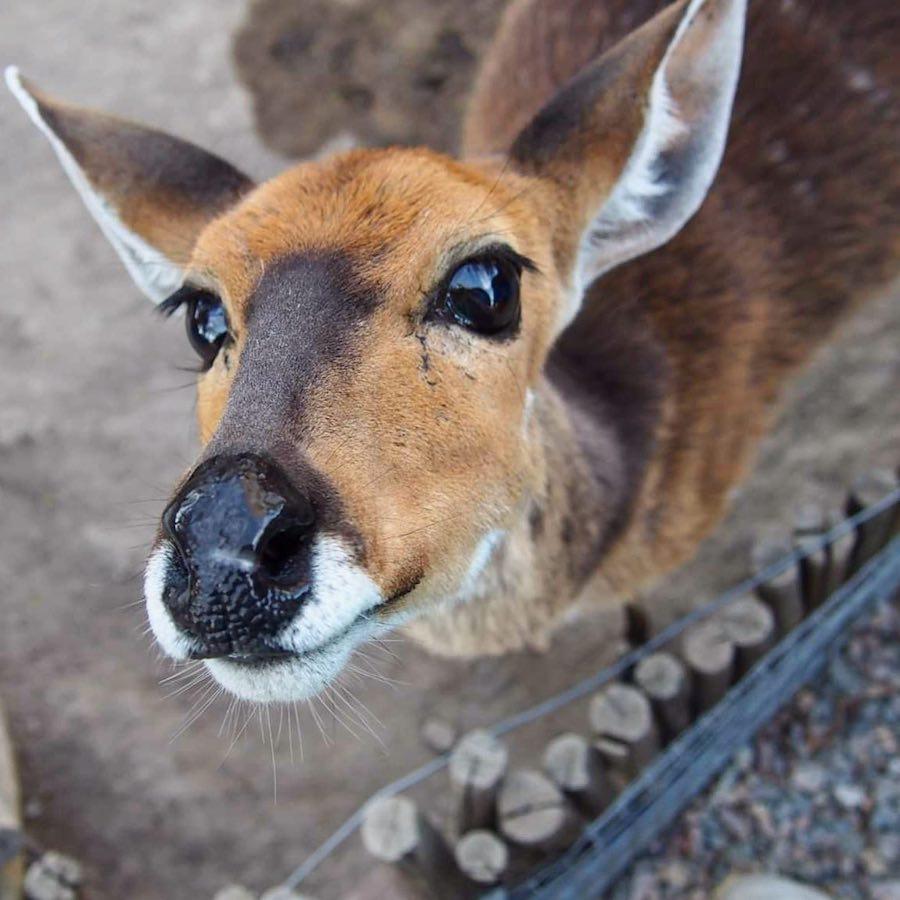 Dierenopvang en bush school voor jongeren in Zuid-Afrika