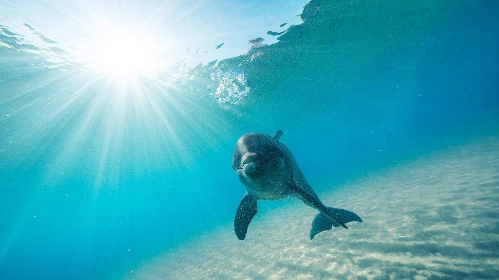 Fotogenieke dolfijnen in Zanzibar Afrika