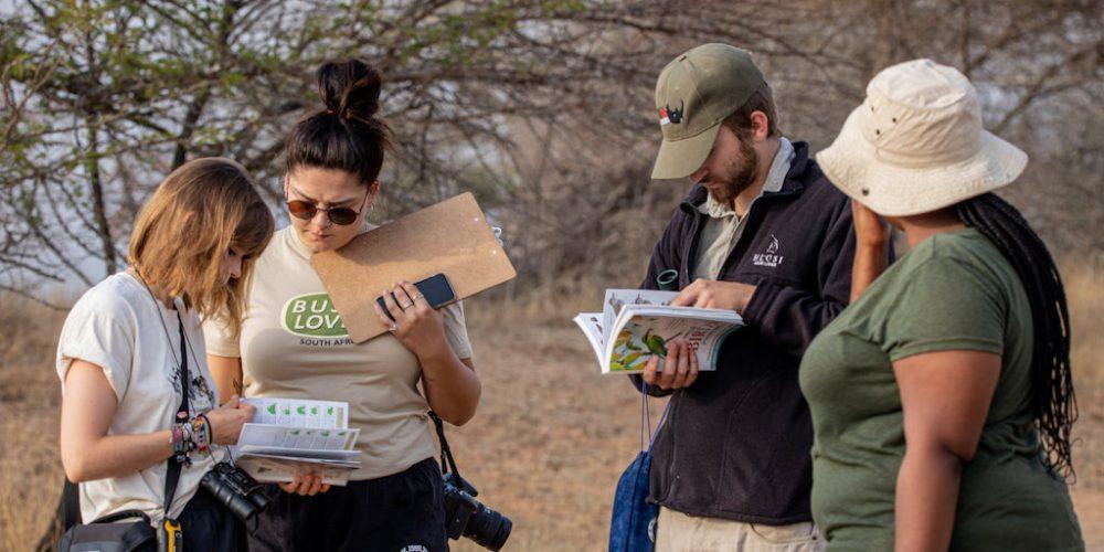 Fotografen aan het werk in het Kruger National Park Zuid-Afrika