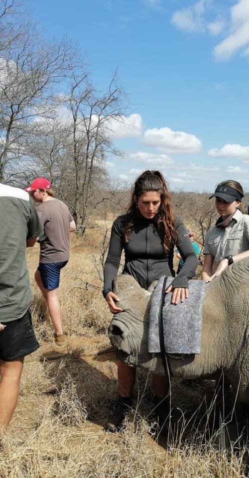 Gewonde neushoorn helpen met het Wildlife Rescue Project in Zuid-Afrika