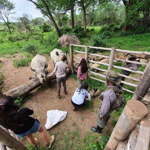Hands-on werken als vrijwilliger met de neushoorn
