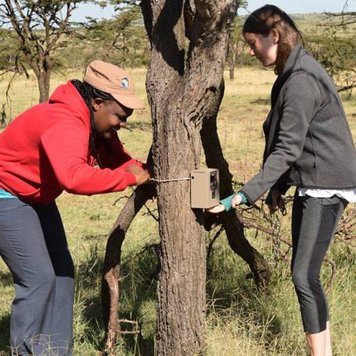 Monitoren van de wilde dieren in Kenia