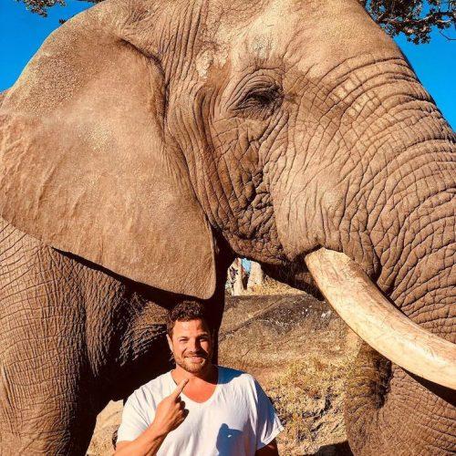 Olifanten beschermen in Zimbabwe als vrijwilliger