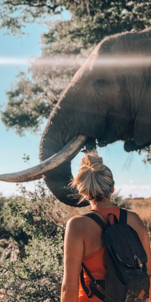 Ontmoet de olifanten in Afrika van dichtbij
