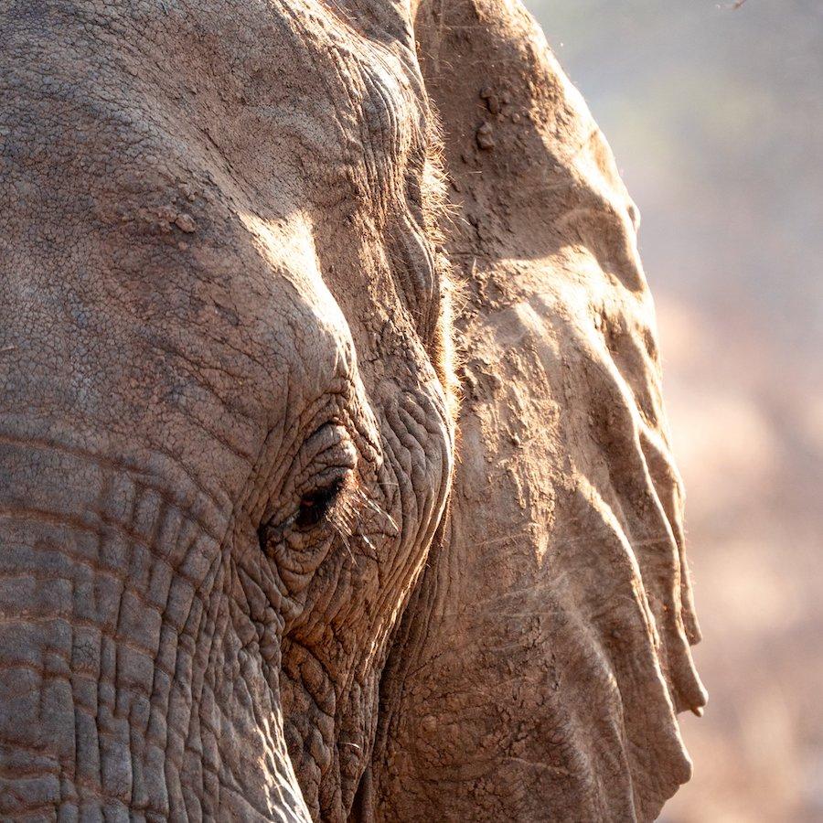 Ontmoet de olifanten van dichtbij in Zuid-Afrika met het Wildlife Fotografie en natuurbehoud vrijwilligersprogramma