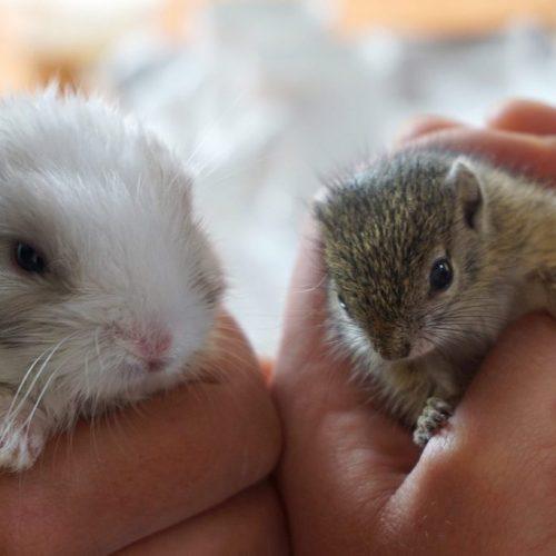 Ook de kleinste diertjes worden opgevangen in Zuid-Afrika