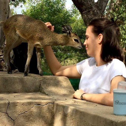 Opvang voor dieren in Zuid-Afrika