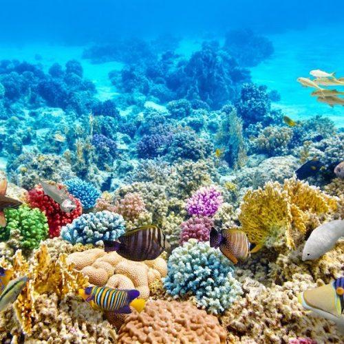 Snorkelen tussen koraal op Pungume Island