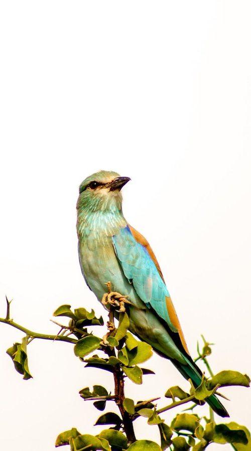 Vogels fotograferen in Zuid-Afrika