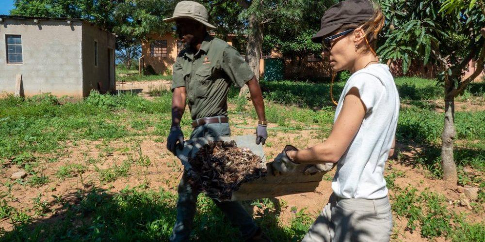 Vrijwilligers aan het werk in het Greater Kruger van Zuid-Afrika