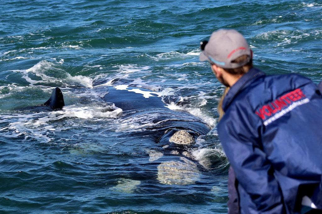 Walvis onderzoek in Zuid-Afrika