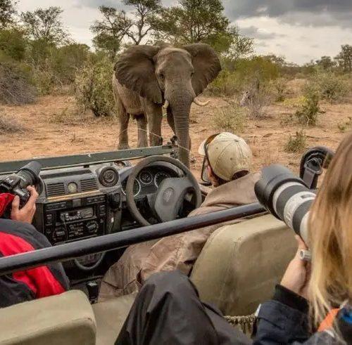 Wildlife Fotografie en natuurbehoud vrijwilligersproject in Zuid-Afrika