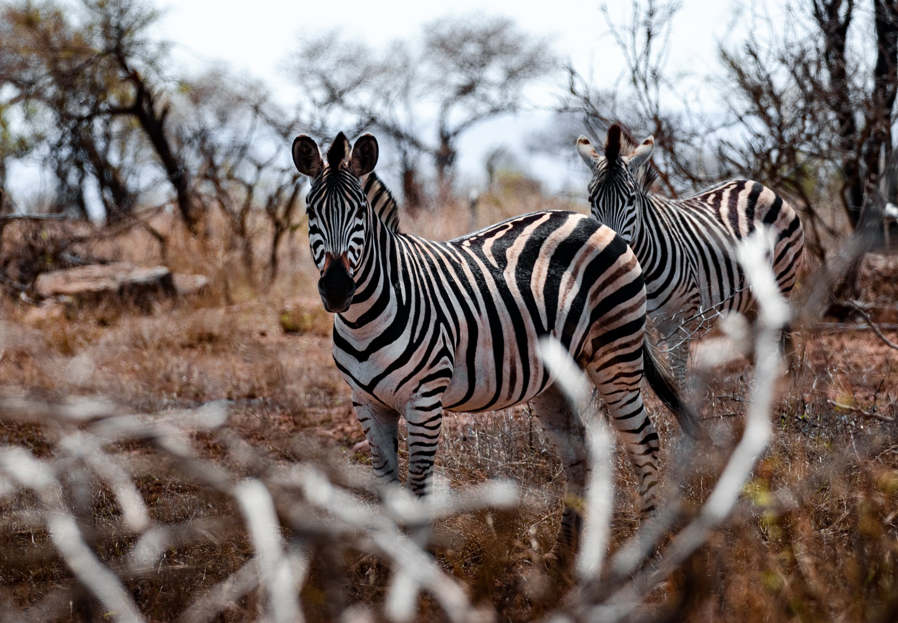 Wildlife Fotografie en natuurbehoud vrijwilligerswerk project Kruger Zuid-Afrika