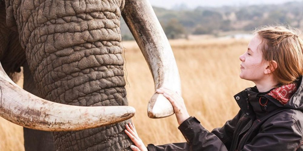 Wordt vrijwilliger en bescherm de olifanten in Afrika