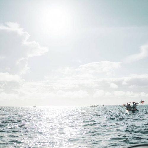 Zanzibar dolfijnen onderzoek