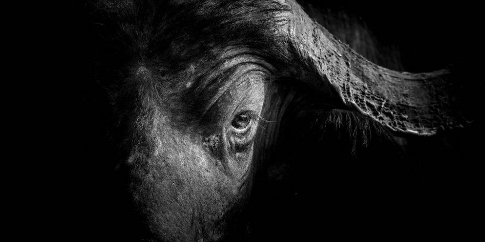 Zwart wit fotografie in Zuid-Afrika