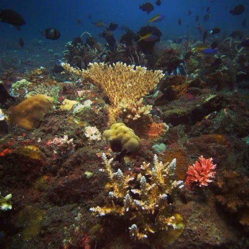 Kunstmatig rifbehoud project Bali