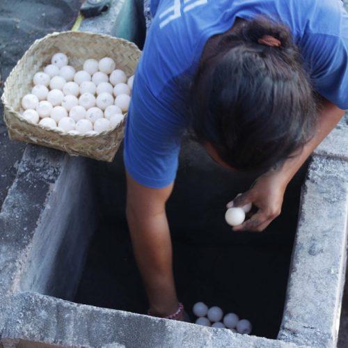 Schildpadden eitjes redden